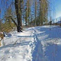 дорожка в снегу :: юрий иванов