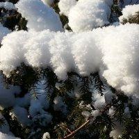 снежок :: Александр Арсеньев