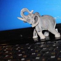 слон :: Ольга Чазова