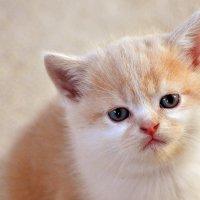 Грустный котёнок :: Владимир Анакин