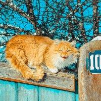 Зима2 :: Ярослав Зинченко
