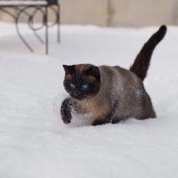 My Cat :: Владислав Медведев