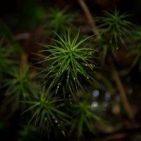 Лесная растительность :: Любовь Анищенко