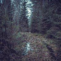 Лес в начале января. :: Любовь Анищенко