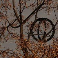Загадочное дерево. Черногория. :: Людмила Синицына
