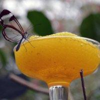 Butterfly :: Яков Геллер