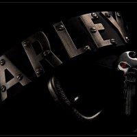 Harley-Davidson :: Larianna Holm