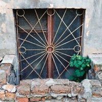 Цветок в окне. :: Александр Самошенко