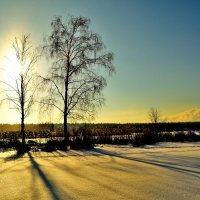 Два дерева и солнце. (часть первая) :: Полторыхин Юрий Полторыхин.