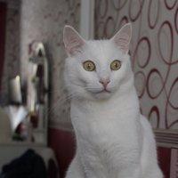 Котик :: Анастасия Малыш