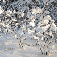 Зима искриться роскошью снегов, Душа от красоты изящной замирает... :: Надежда