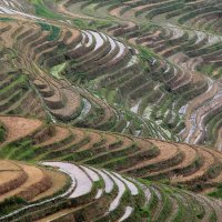 Китай. Рисовые террасы Лонгжи. Деревня Пинь-Ан. :: Виктория