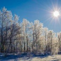 Мороз и солнце :: Дмитрий Тарарин
