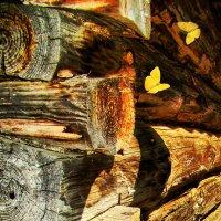 Домик для бабочек :: Елена Строганова