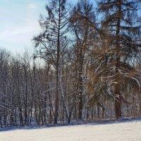 Морозный день. :: Юрий Шувалов