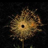 Бенгальский цветочек :: Иван Ко