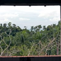 взгляд на джунгли... :: Надежда Шемякина