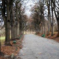 Поздняя осень в Ботаническом саду... :: Владимир Бровко