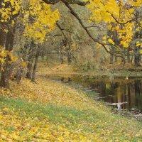 Осень :: Владимир Гилясев