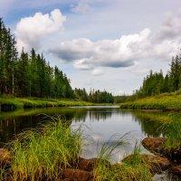 Река Большая Чайка :: Николай Андреев
