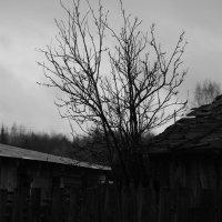 Осень :: Андрей Резенов