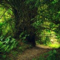 В джунглях... :: алексей афанасьев