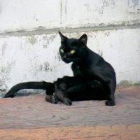 городская пантера :: Наталья Нарсеева