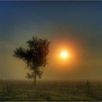 В утреннем тумане. :: Nikita Volkov