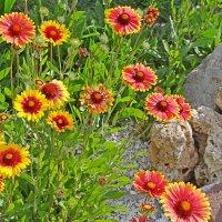 Цветы :: Юрий Владимирович 34