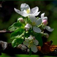 Весна :: Михаил Рогожин