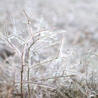 Лёд :: Полина Дюкарева