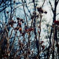 холодная осень :: Виктория Сорока