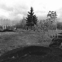 Высадка деревьев :: Ольга Чазова