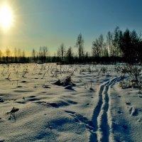 Кто смел топтать мою лыжню! :: Полторыхин Юрий Полторыхин.