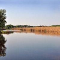 Утро на речке :: Валентина Белоусова
