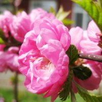Весна :: Ольга Суязова
