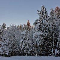 Утро в зимнем лесу :: ирина )))