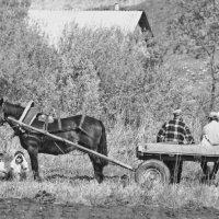 .сельская жизнь.. :: Galina G