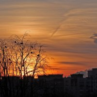 Птицы на фоне заката... :: Nonna