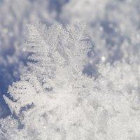 снег :: Соня Орешковая (Евгения Муравская)