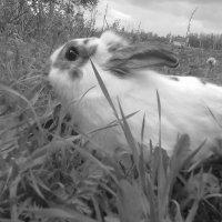 Кролик :: Lena Kwasowa