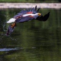 Кирилл Дорофеев - Рыбак :: Фотоконкурс Epson