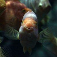 Счастливая рыбка :: Виолетта