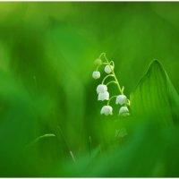 весенний минимализм :: герасим свистоплясов