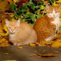 Осенние рыжики. :: Валерий Антипов