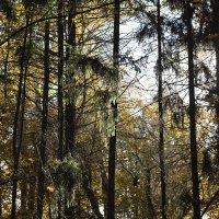 в лесу :: Геннадий Свистов