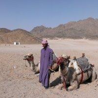 В деревне бедуинов. Египет. :: Полина Polli