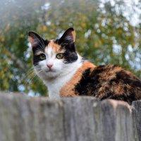 кошка на посту :: Angelina.K.