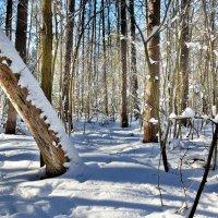 зима в лесу :: Сергей