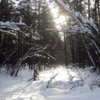 Зимний Кузьминский лес. Москва :: Ольга Кривых